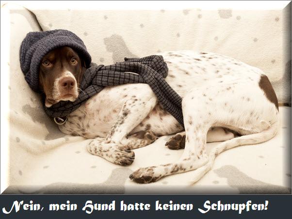 Hund mit Schnupfen